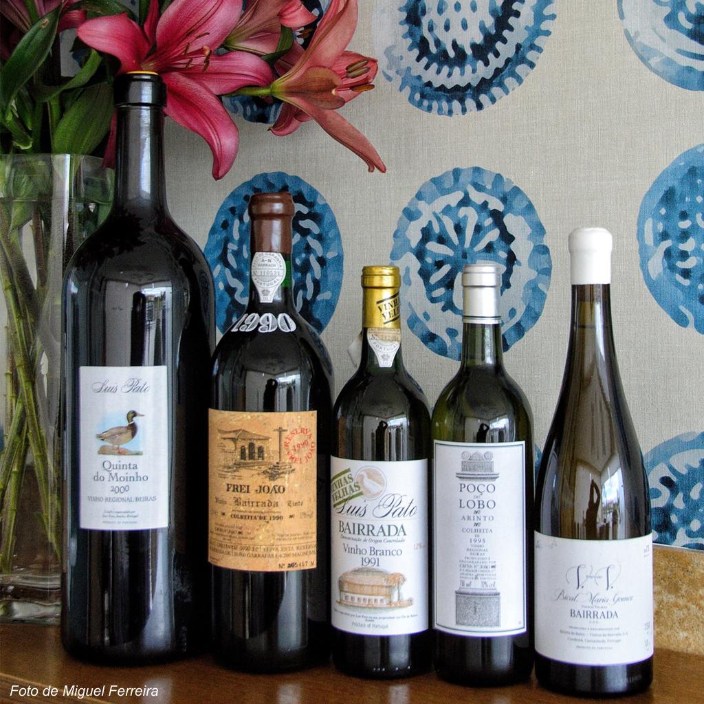 Vinhos da Bairrada eleitos como os 'Melhores de Portugal' em concurso nos EUA